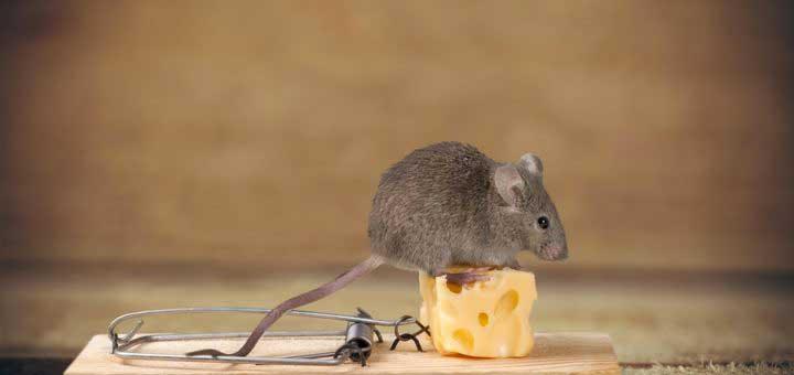 pieges-rats-souris